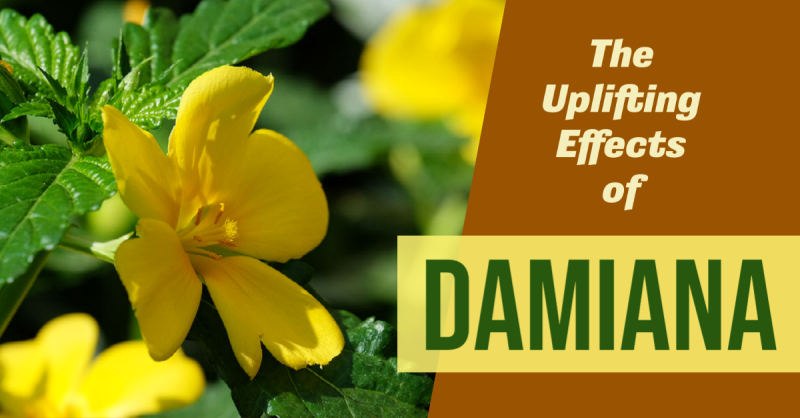 The Uplifting Effects of Damiana
