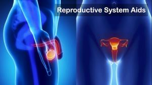 Reproductive System Formulas