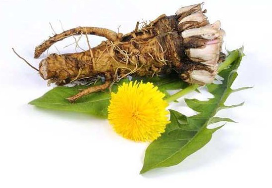 Dandelion Root and Blossom