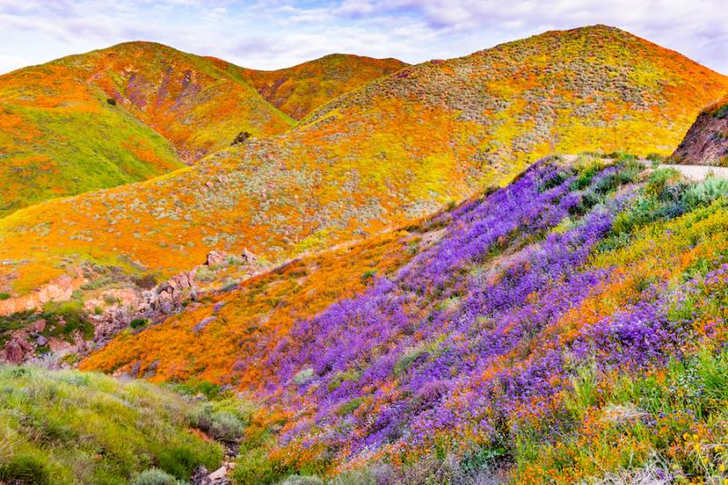 Mountains covered with California poppies
