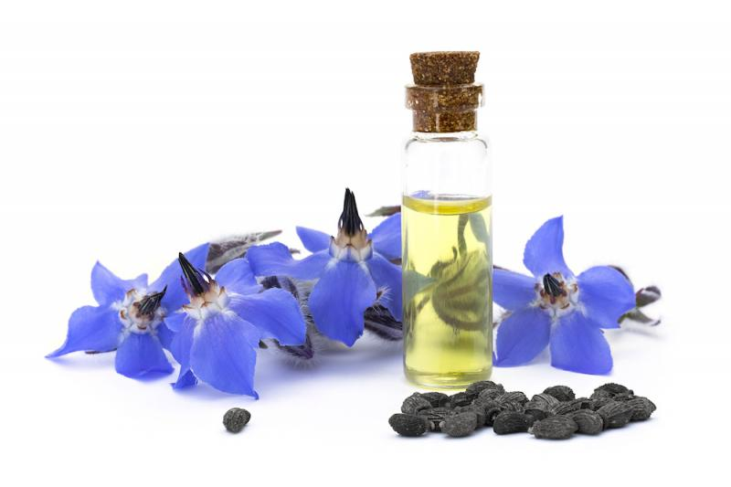 Borage oil with flowers