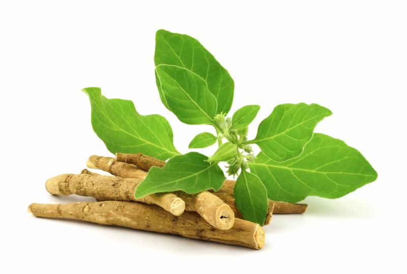 Ashwagandha leaves and roots