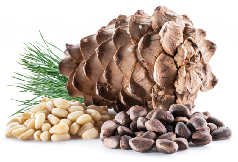Pine Nuts and Cone